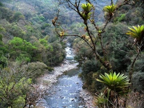 Bosques del Rio Negro - יערות הנהר השחור